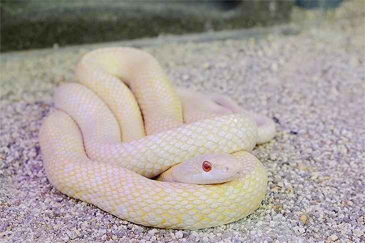白蛇の画像